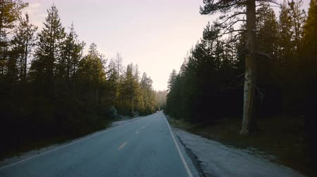 útěk : Amazing POV view of car moving on beautiful quiet forest road between tall pine trees on sunset in Yosemite slow motion. Dostupné videozáznamy
