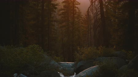 steinhaufen : Camera tilts up from beautiful mountain river creek flowing down to amazing forest sunset at Yosemite park slow motion. Videos