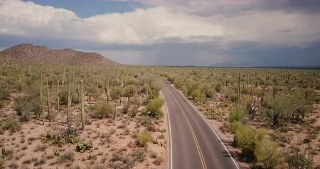 феникс : Drone flying above beautiful winding desert road in the middle of large cactus field in Arizona national park desert USA