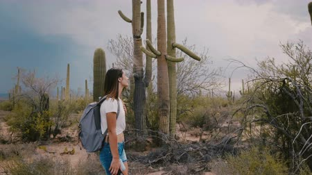 sudoeste : Slow motion medium shot, happy young tourist woman hiking at amazing wild cactus desert in Arizona national park USA. Stock Footage