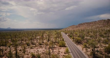 anka kuşu : Drone flying low above desert road, stationary car in the middle of amazing cactus field at Arizona national park USA.