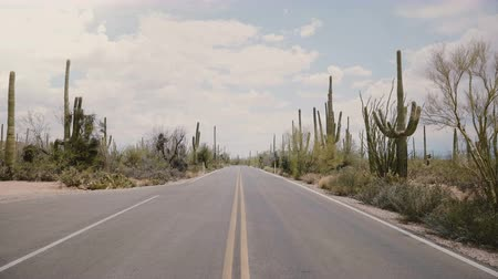 nedvdús : Camera quickly tilts up in the middle of empty desert road with big Saguaro cactus growing on both sides in Arizona USA.