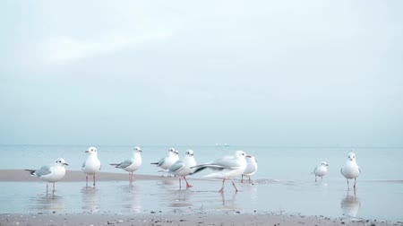 sobre o branco : Seagulls on the Baltic sea in winter
