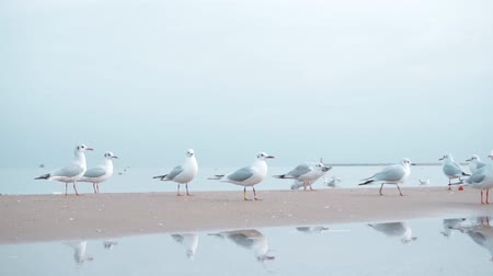 baltské moře : Seagulls on the Baltic sea in winter
