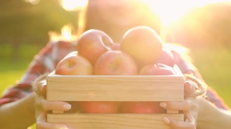 crate : Young blurred woman in casual clothes holds a wooden crate with beautiful red ripe juicy apples while walking on the farm on a sunny warm summer day. Gardening Concept. Full hd 1080 footage