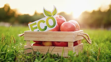 crate : Hand puts an eco inscription on a wooden box with tasty fresh apples standing on a green lawn on a sunny summer warm day. Bio products concept. Full hd 1080 footage