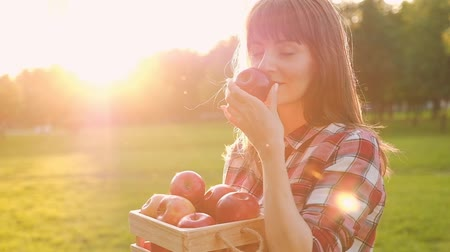 Beautiful young woman in casual clothes inhales the aroma of a ripe fresh apple from a wooden container while walking in the countryside on a sunny summer day. Harvest concept. Full hd 1080 footage