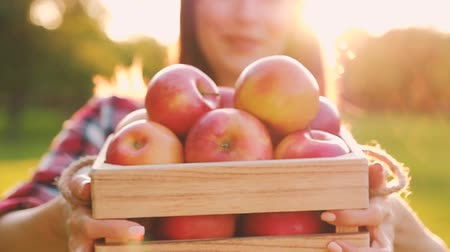 conceitos : Young blurred woman in casual clothes holds a wooden crate with beautiful red ripe juicy apples while walking on the farm on a sunny warm summer day. Gardening Concept. Full hd 1080 footage