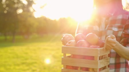 Side view of a positive young woman in casual clothes holding a wooden crate with ripe juicy red apples in her hands while standing on the field on a sunny warm summer day. Organic gardening concept.