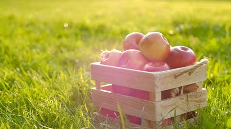The camera moves away from a wooden crate with red beautiful fresh ripe apples standing on a green lawn on a sunny warm summer day. Fruit and Juice Concept. Full hd 1080 footage