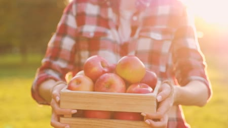 fresh produce : Young slim woman in casual clothes holds in her hands a wooden box