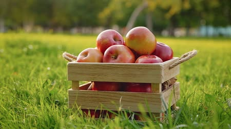 engradado : Camera rotates around a wooden crate full of red ripe shiny fresh apples