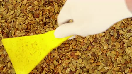 sabor : top view worker hand wearing white gloves moving pumpkin seeds Stock Footage