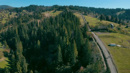 karpaty : drone flies over a pine forest along a country road on the background green dense pinewood Dostupné videozáznamy