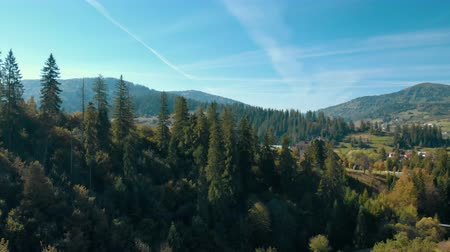 drone flying over pinewood in Carpathians summer season mountain landscape