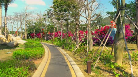 Scenic cityscape with picturesque plants along the way. Beautiful park in Sanya, China. Стоковые видеозаписи
