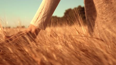 margen : b roll farmer touching yellow grain at harvest time golden light sunrise women at agricultural