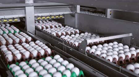 egg sorting : colored packages with eggs move along the conveyor belt