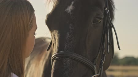 stabilní : Cropped view of a calm young girl jockey is stands next to a brown horse while petting it at the open area