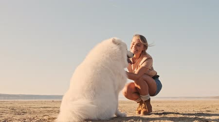 chlupatý : A happy young woman is petting a  big white dog samoyed on the lake Dostupné videozáznamy