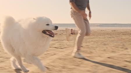 samoyed : A young couple man and woman are running with a dog samoyed on the lake in summer
