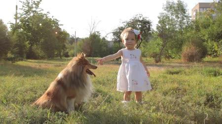 playing with a dog : Little girl and dog breed sheltie playing outdoors on a sunny day Stock Footage