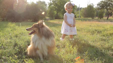 quintal : Little girl and dog breed sheltie playing outdoors on a sunny day Vídeos