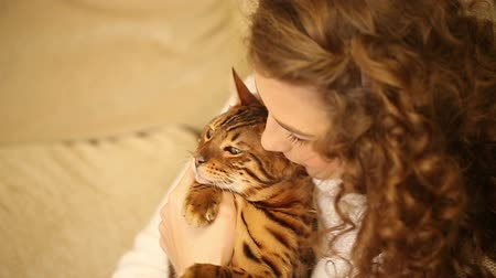bengal cat : Young girl playing with a pet. Bengal cat. Girl hugging and playing with the cat. Home comfort. Best friends. She laughs.