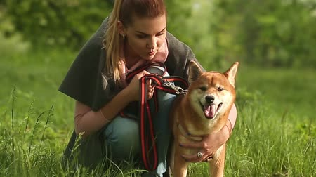 despreocupado : Girl scratching Shiba Inu dog in Spring Park. A dog on a walk. Fun with a pet.