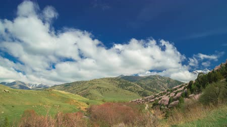 damascos : Spanish spring mountains with flowering trees and beautiful clouds in timelapse 4K Stock Footage