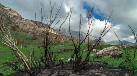 hamu : Burnt trees after a fire in the spring mountains in California in timelapse 4K Stock mozgókép