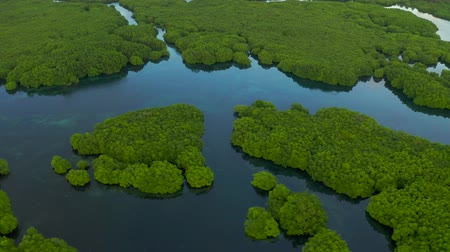 Flooded amazonian rainforest in Negro River, Amazonas, Brazil