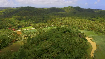 Aerial view of palms forest, road and mountain on the Siargao island, Philippines. Стоковые видеозаписи