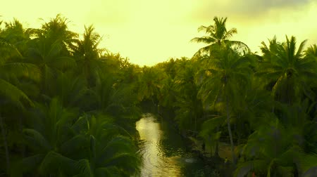 Palm tree jungle in the philippines. concept about wanderlust tropical travels. swinging on the river. People having active fun in river.