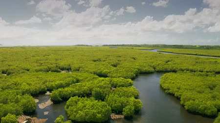 Natural landscape of mangrove forests, and aboriginal fisherman hut on the rivers