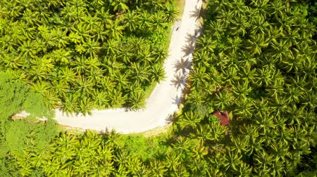 Aerial view of the road somewhere among coconut palms in Siargao, Philippines. Стоковые видеозаписи