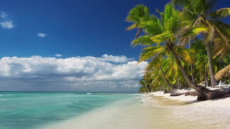 beach panorama : Palm trees on luxury exotic beach Stock Footage
