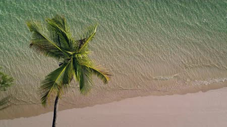 jamaica : Aerial video of Palm tree, sandy island beach and clear turquoise sea water
