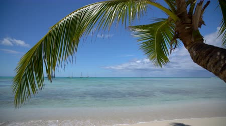 jamaica : Palm tree leaf and sandy tropical island beach, beautiful sea view video