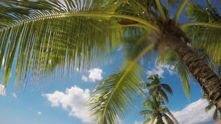 jamaica : Palm tree leaf and sandy island beach. Hot summer day video. Stock Footage