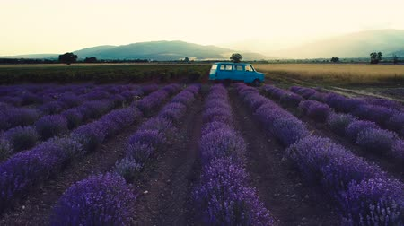 lavender field : Lavender field at sunset. Old van between the rows