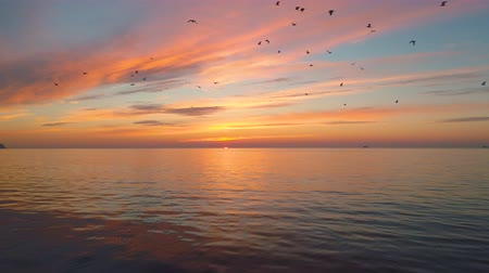 fly fishing : Sunrise over the sea and flying birds