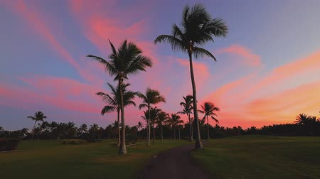 фарватер : Golf course in the tropical island, beautiful sunset with palm trees silhouettes video