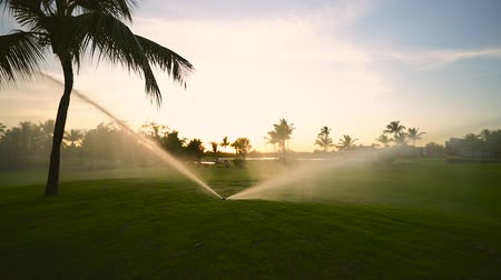golfové hřiště : Golf course sprinkler on fairway during golden sunset