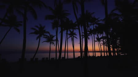 barbados : Exotic caribbean island. Sea sunrise over coconut palm trees on tropical beach. Stock Footage
