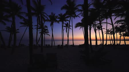 barbados : Beautiful sunrise over the tropical beach with coconut palm trees. Punta Cana resort, Dominican Republic Stock Footage
