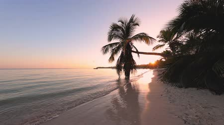 Виргиния : Tropical island sunrise. Palm tree leaf and sandy island beach. Beautiful sea view video. Стоковые видеозаписи