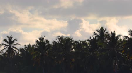 jamaica : Coconut palm trees from lagoon against bly tropical sky with clouds