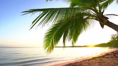 Мальдивы : Beautiful sunrise over the tropical beach with coconut palm trees Стоковые видеозаписи