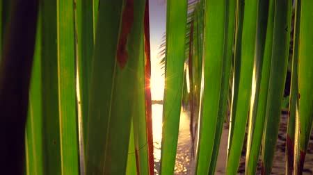 karibský : Sunrise over tropical beach and palm trees. Sunlight between palm tree leaf